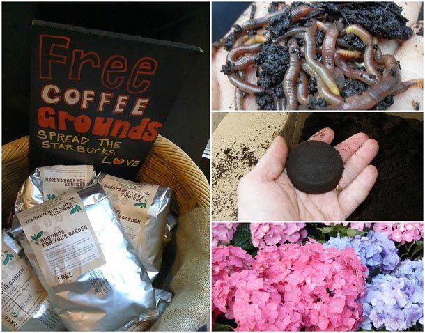 10 Genius måter å bruke gamle kaffegrut i hagen din