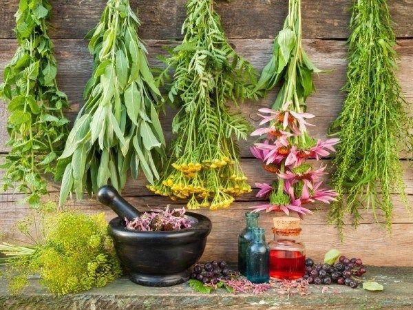 12 Helbredende urter du trenger for å vokse i din medisinske hage