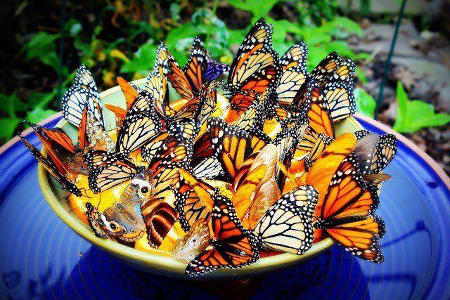 14 Vakre DIY sommerfugl brett for å gjøre hagen din en sommerfugl paradis