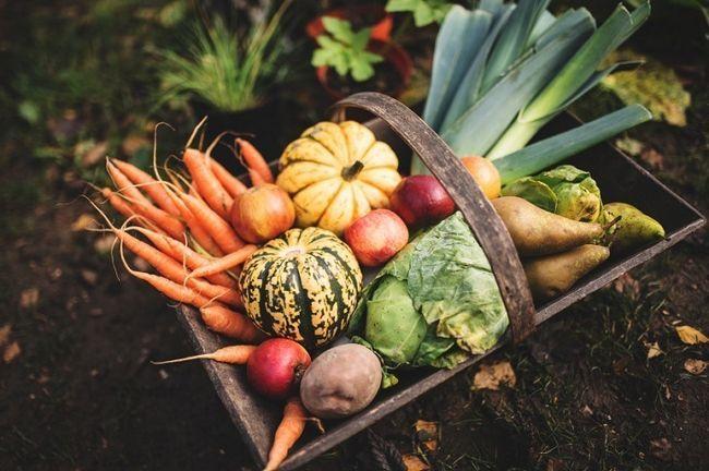 17 Organiske hemmeligheter til Turbocharge hagen harvest