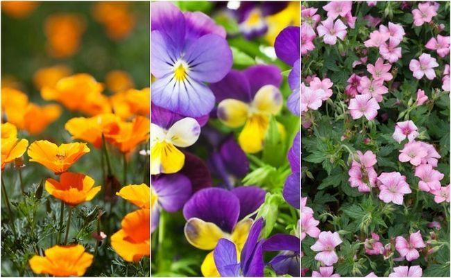 18 Enkleste og mest vakre blomster alle kan vokse i hagen