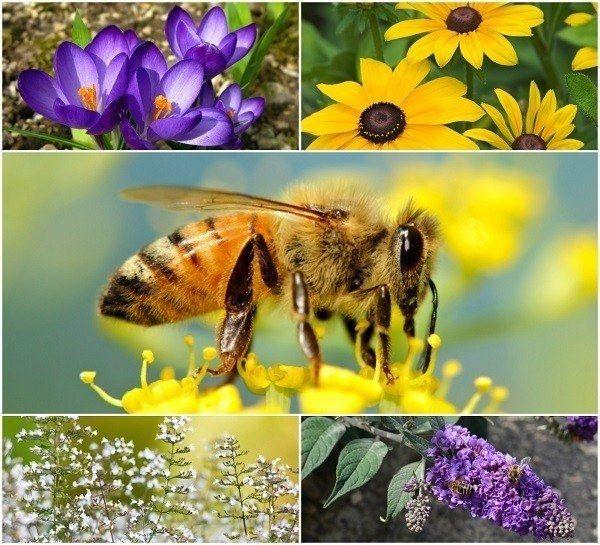 20 Vakre blomster for å tiltrekke bier til hagen din