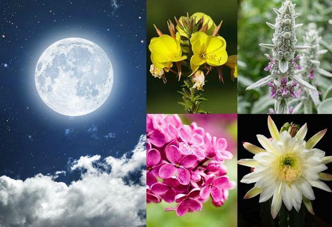 20 Planter til å vokse i måneskinn hage