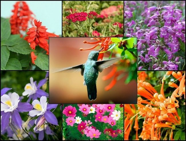 21 Glorious hageplanter som tiltrekker seg kolibrier