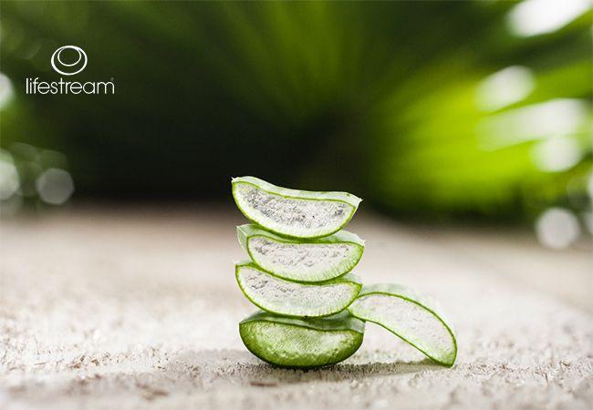5 Helsemessige fordelene av Aloe Vera