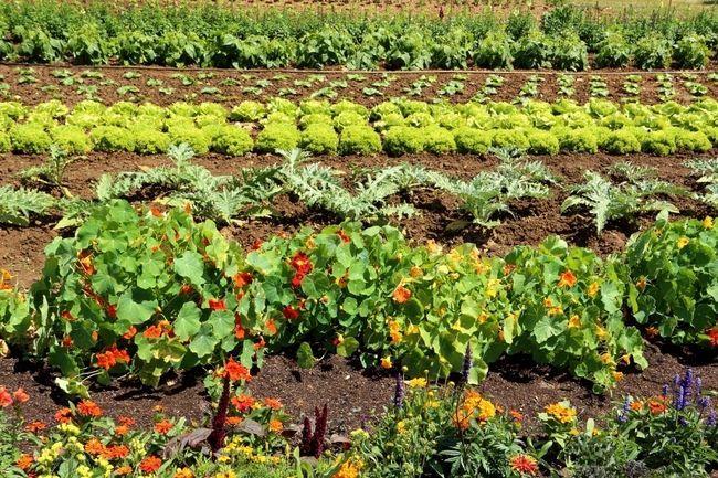 5 Instant triks for å betydelig øke hagen din avkastning