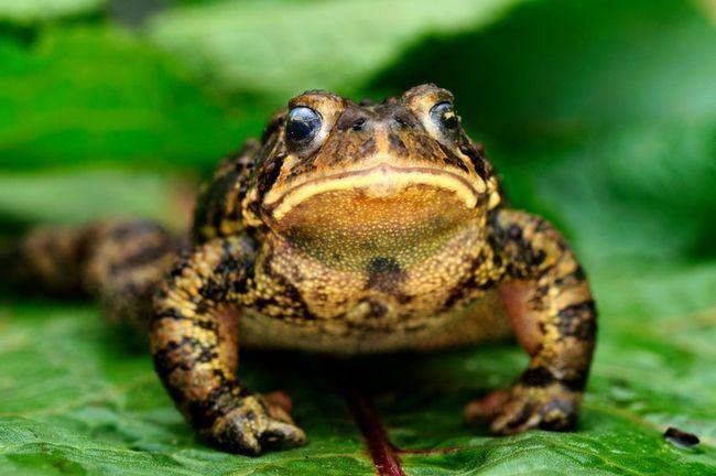 9 Måter å tiltrekke frosker og padder til hagen din