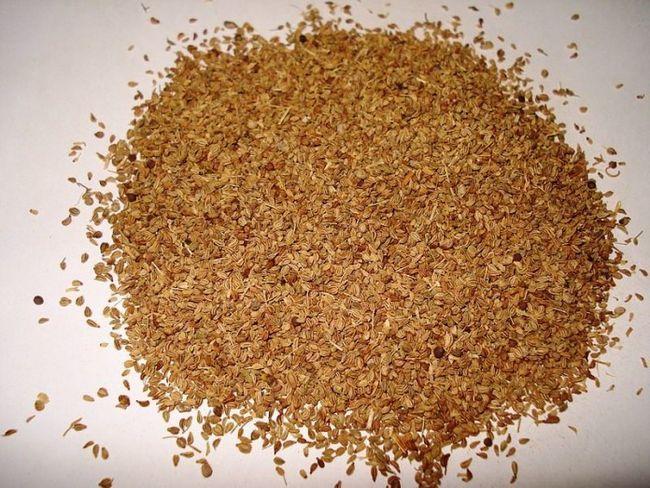 Fantastisk helsegevinst, bruker og bivirkninger av ajwain (carrom frø) som du bør vite