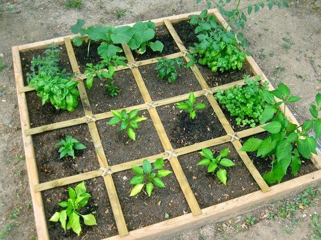 Hvordan planlegge en firkantet fot grønnsakshage - den enkleste måten å vokse rikelig veg