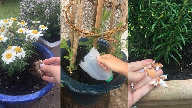 Rare måter å bruke 21 husholdningsartikler i hagen din